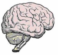 illustration profile of brain