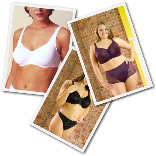 plus size bras from Butterfly Collection