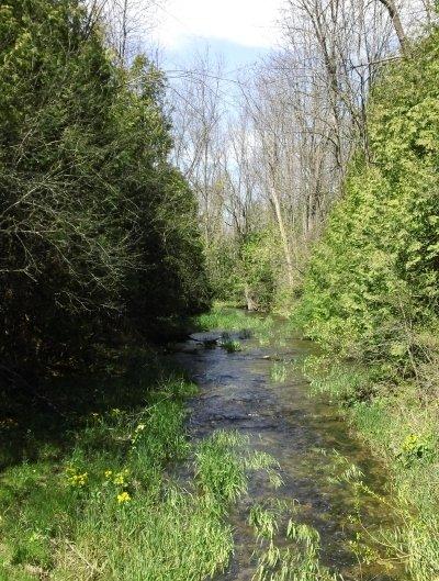 creek and shrubs