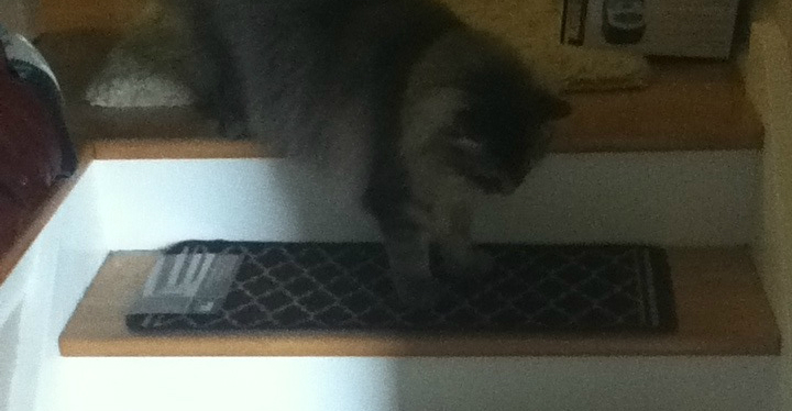 grey cat on stairs