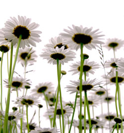 A daisy supported by his friends and neighbors.
