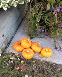 Mini pumpkins used as outdoor decorations in fall.
