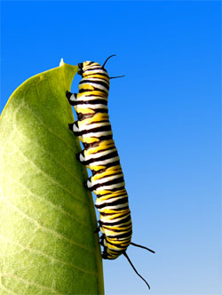 Suggestions for staying inspired while writing.